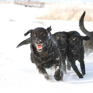 Erster Schnee, da war die Freude groß!