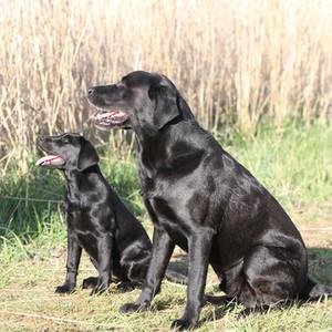 Fisher und Cael