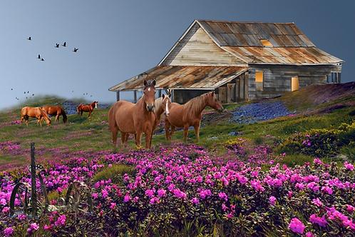 "Mustangs / Giclee 13""x16""/ Artist Proof"