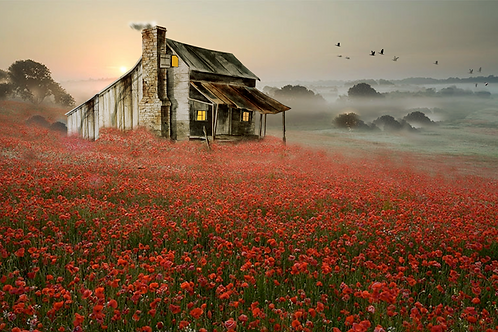"""Red Poppies / Giclee / 10""""x 17"""""""