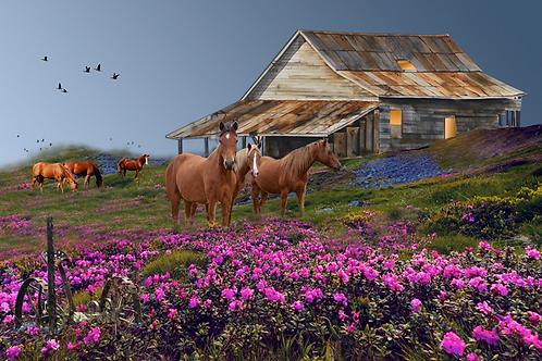 "Mustangs  /  Giclee  / 11""x 16.5"""