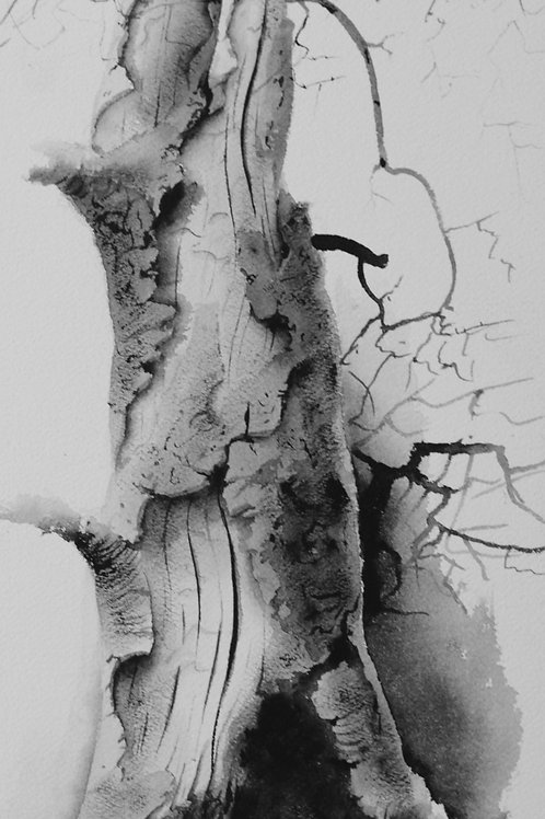 "Mothers Tree / Pencil Painting / 11""x 17"""