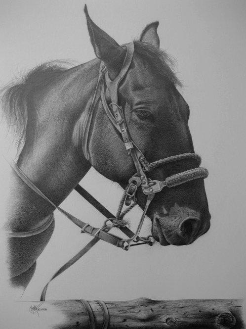 My Pony / Pencil Painting