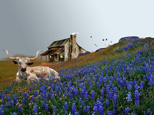 """Texas Longhorn / Giclee / 10""""x 13.5"""""""