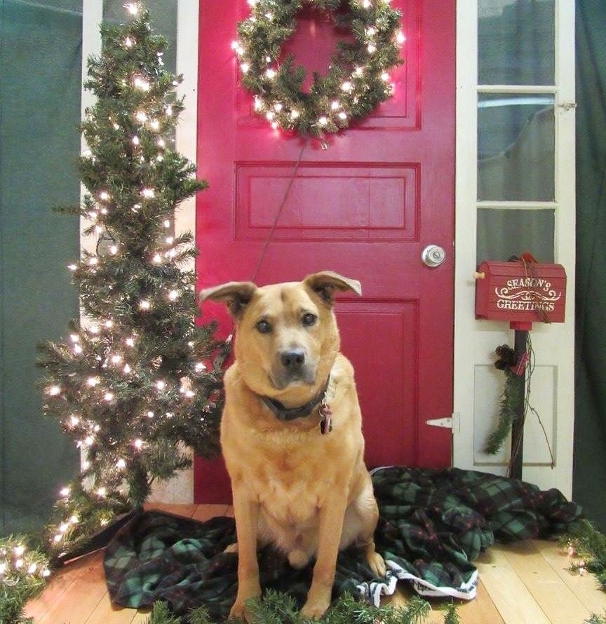 rudy christmas photo