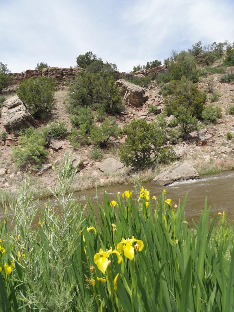 river-iris