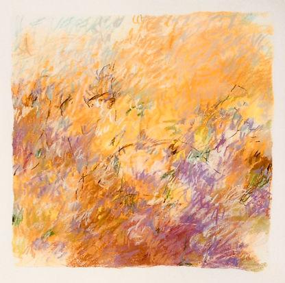 lightonthe meadow.jpg