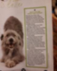 your dog inside .jpg