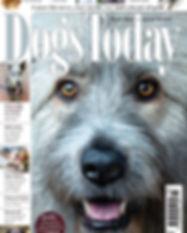dogs today kratu march.jpg