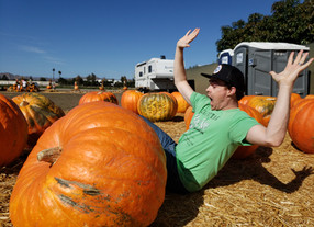 We Can't Stop Here, This is Pumpkin Country!
