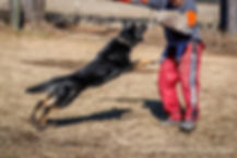 Beast.jpg, staatsmacht, police dog, german shepherds minnesota, german shepherd usa, police dog, working dog, dog trainer, aggressive dog trainer