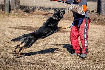 Beast.jpg, staatsmacht, police dog, german shepherds minnesota, german shepherd usa, police dog, working dog, dog trainer, aggressive dog trainer