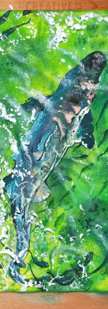 Painting Shark 3