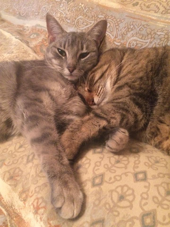 Cats-Website