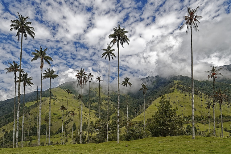 9 - colombia-4909308.jpg