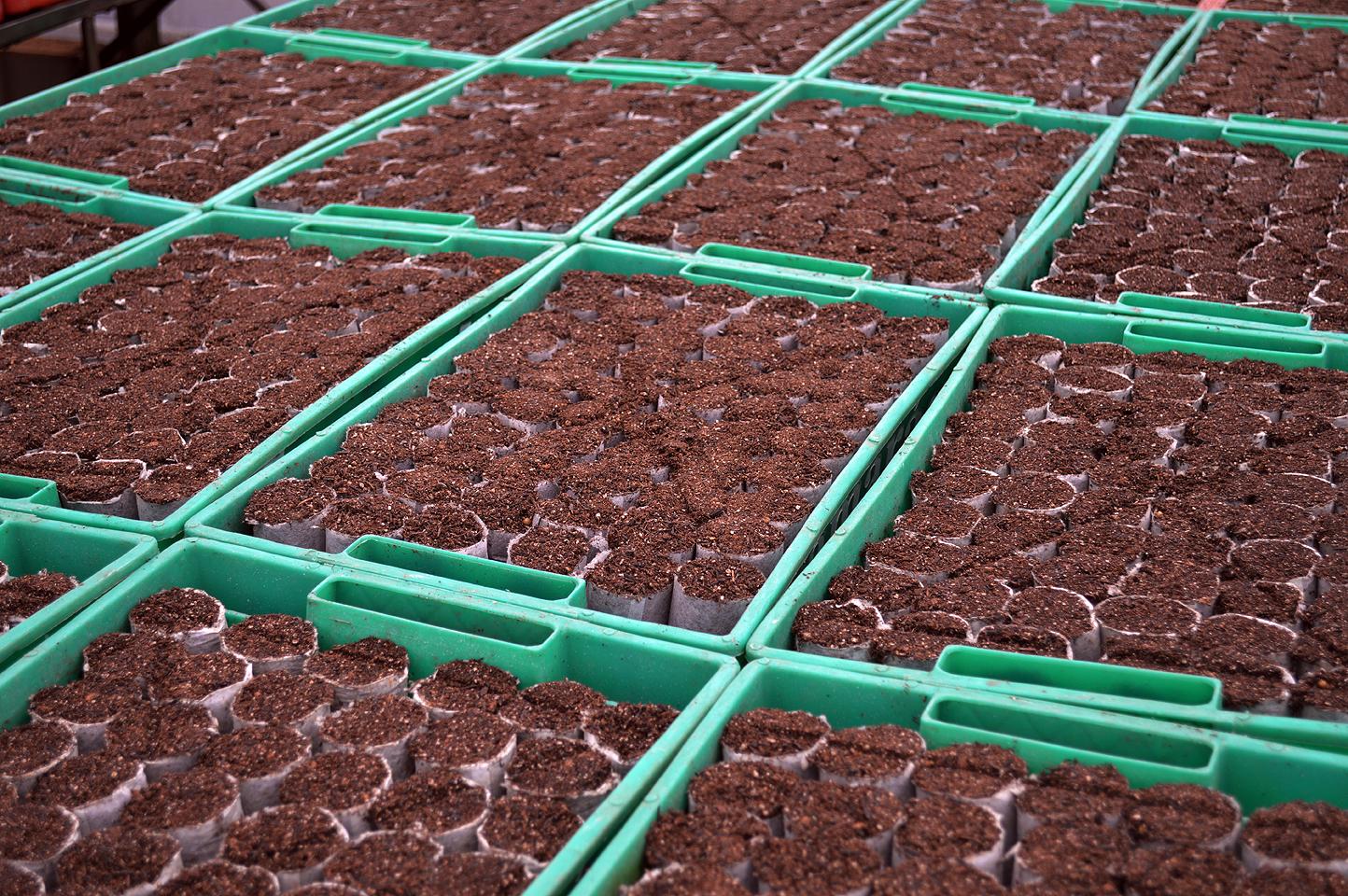 Recipiente de 45 mm para semeadura