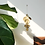 Thumbnail: Informal Pirinç Loop