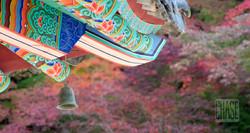 Fall at Beopjusa Temple in Korea