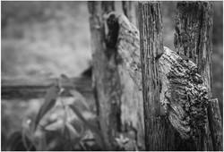 Woodcloseup