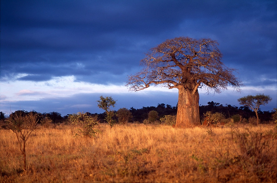 Wilson and clark journey africa 12.jpg