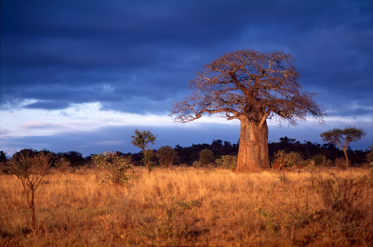Wilson and clark journey africa 12