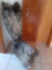 Stuhl Zebra Bretz_bearbeitet.jpg