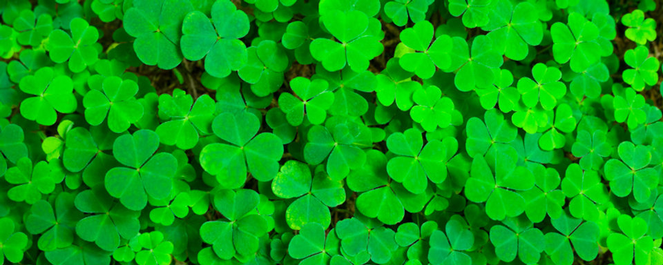 x800-shamrocks-5x2.jpg.pagespeed.ic.VMs7