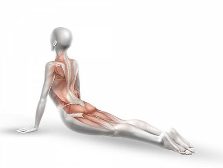 yogaforbackpain.jpg