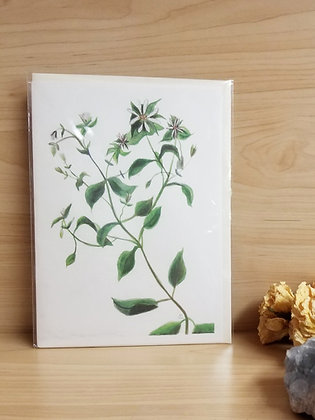 Chickweed Card
