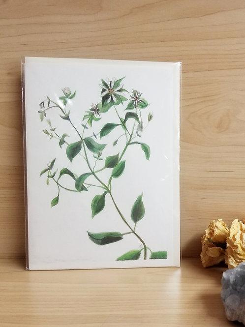 Chickweed Card