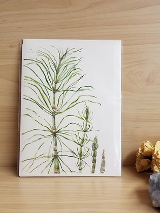 Horsetail Card