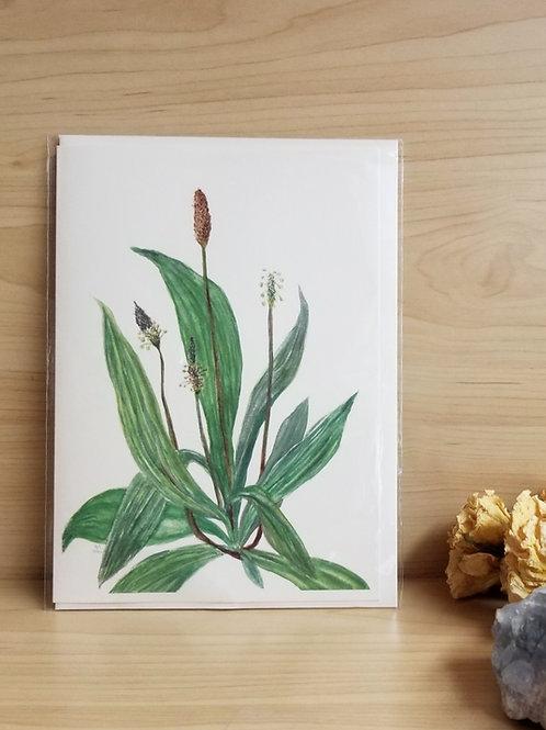 Plantain Card
