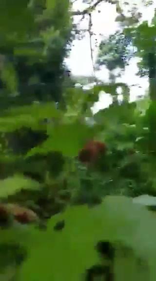 video-1559939193.mp4