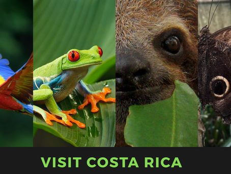 Traveller's Guide 101: Everything you need to know about Costa Rica! #PuraVida