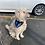 Thumbnail: Blue Buffalo Plaid Dog Bandana