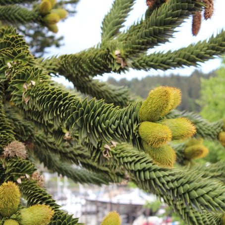 Coniferous…Deciduous…Evergreen!