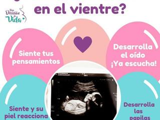 ¿Qué siente tu bebé en el vientre?