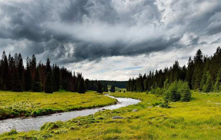 Šumavské Návraty k divočině