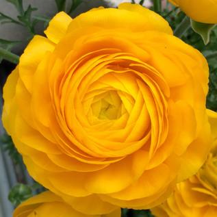 10/15(金)黄色い瞑想ワークショップ