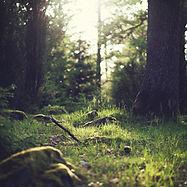 Forest Grass