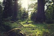 soin chamanique ésprits de la nature