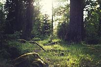 forêt Herbe
