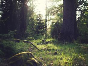 ŠINRIN-JOKU umění lesní terapie