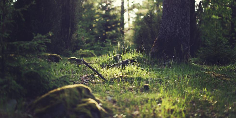 Online Workshop (Zoom) - The Seasons of Mediumship