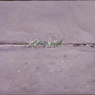 Grass Leaf In The Asphalt Ground - 46x55cm - Marc GOLDSTAIN 2005 - Oil On Canvas - Urban Landscape - Comtemporary Painting