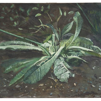 Dandelion Day Three - 50x65cm - Marc GOLDSTAIN 2004 - Oil On Canvas - Vineyard - Durban - Country - Agriculture - Contemporary Painting