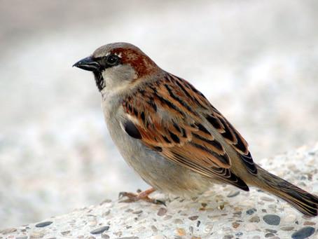 Faith Like Birds - Part iii