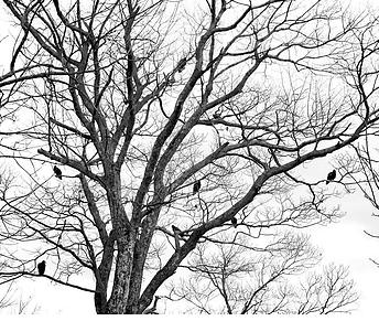 Faith Like Birds - Part VII