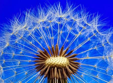 Christian Seeds for Soul