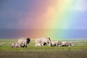 0_CATERS_elephants_and_rainbows_001-768x
